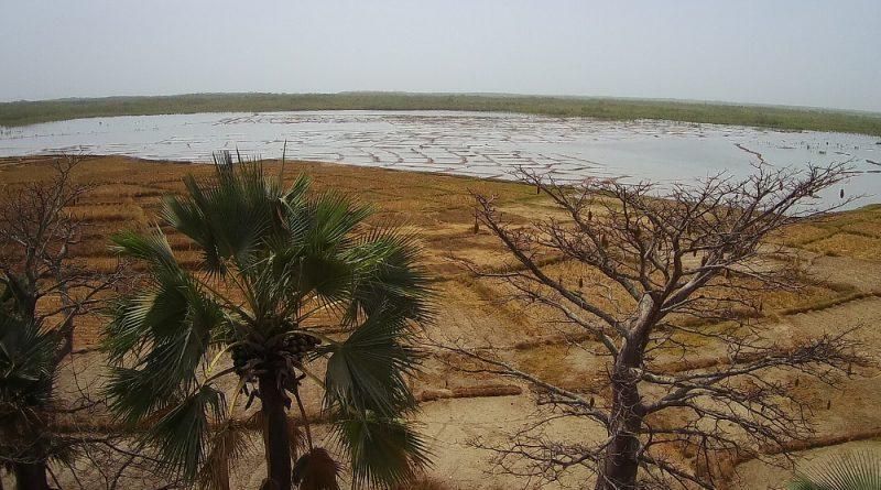 Les rizières salées vues de Essagholou